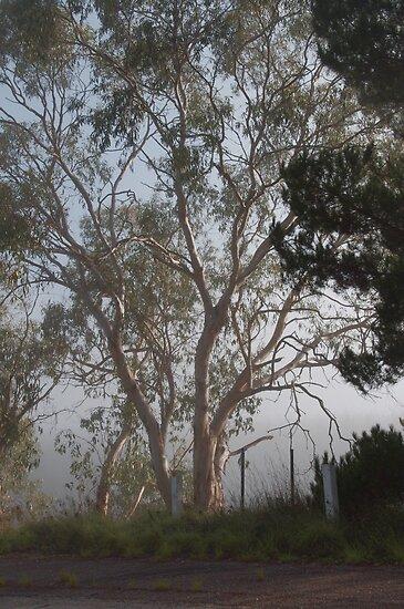 Gum tree in the mist by Deborah McGrath