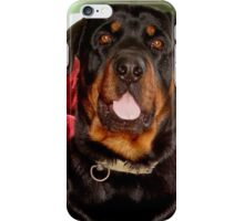 Portrait Of A Young Rottweiler Male Dog iPhone Case/Skin