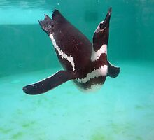 Penguin Swim  by Sammygirls