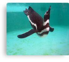 Penguin Swim  Canvas Print