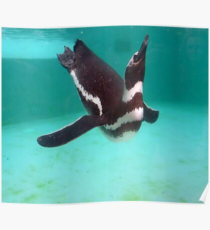 Penguin Swim  Poster