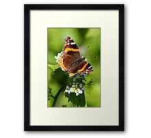 Red Admiral Butterfly Portrait Framed Print