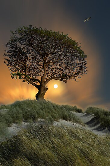 2749 by peter holme III