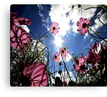 Flowers look to the sky Canvas Print