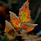 Stained Glass Leaf by starwarsguy