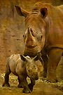 Digger and His Mama by Wendi Donaldson Laird