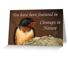 Closeups in Nature Banner Greeting Card