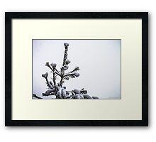 Tip of the Spear Framed Print