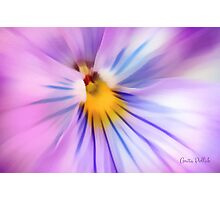 Party Time Pansy Photographic Print