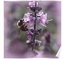 a hive of activity - bees in the basil Poster