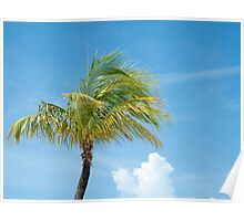 Palm tree in breeze, idyllic scene. Poster
