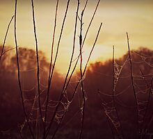 Sunrise through the web by megamonroe