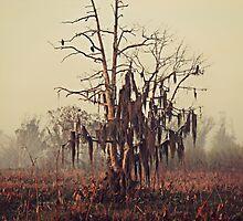 Tree in the mist by megamonroe