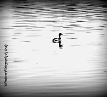 Duck Floating Black and White by Lindy Long