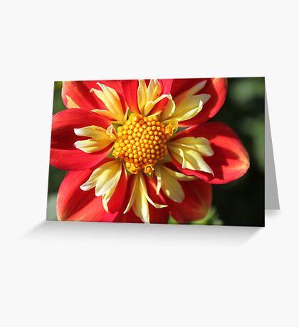 Unusual Dahlia.. Greeting Card