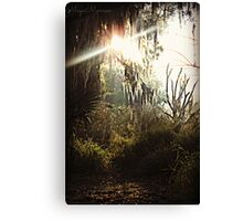 Sun peering through the weeping willow Canvas Print