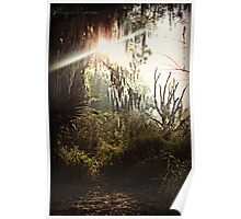 Sun peering through the weeping willow Poster