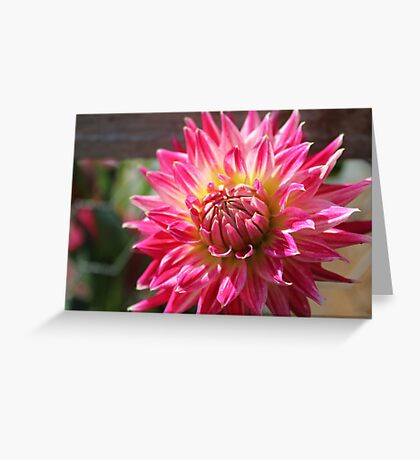 Another pretty Dahlia Greeting Card