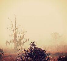 Misty morning  by megamonroe