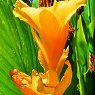 yellow lillie flower by outbacksnaps