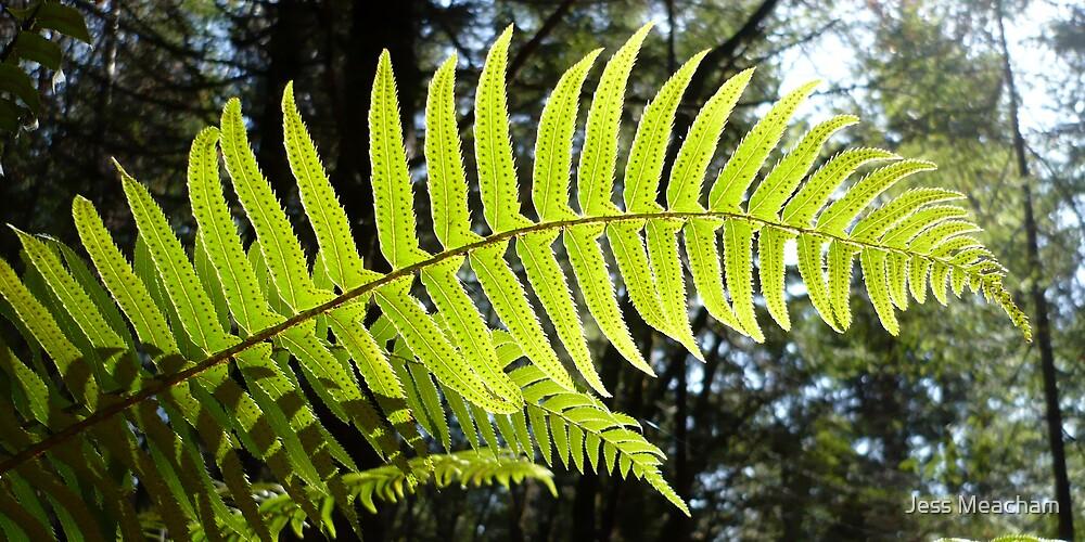 Sunlit Ferns by Jess Meacham