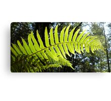 Sunlit Ferns Canvas Print