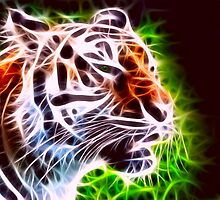 Fiery Tiger by Norma Cornes