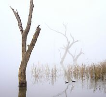 Misty lake - Lake Mulwala by Hans Kawitzki