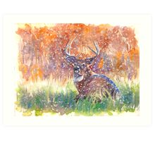 a stag in Winter Art Print