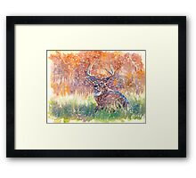 a stag in Winter Framed Print