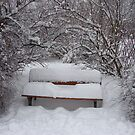 Lonely bench under the snow by Eva Novkov