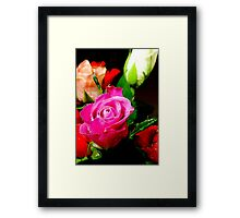 A pink rose Framed Print