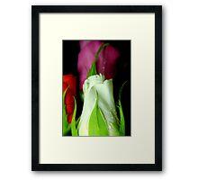 White against colour Framed Print