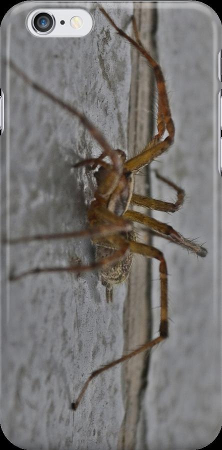 Spider by scott staley