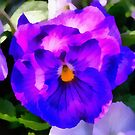 Spring Pansy  by Lee d'Entremont