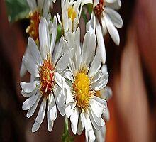 flowers by scott staley