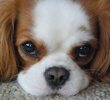 delightful doggies - galleria mancuso by Anthony Mancuso