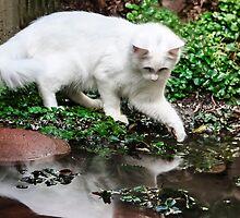 Maya Sees Her Reflection! by heatherfriedman