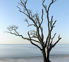 Botany Bay Blues  by JHRphotoART