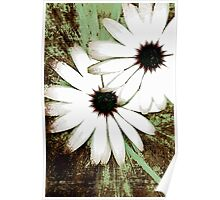 grungy daisys Poster