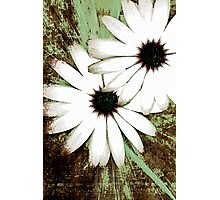 grungy daisys Photographic Print