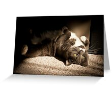 Biddy Catching Rays Greeting Card