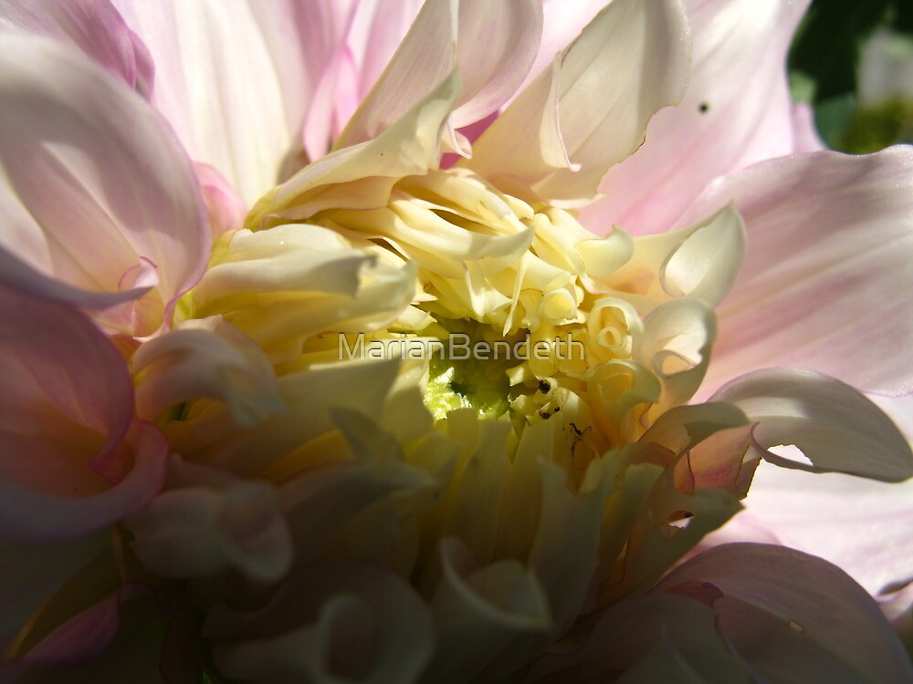 Dahlia soul by MarianBendeth