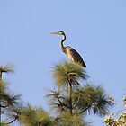 Bird overlooking on Pine Tree by art-hammer