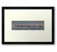 A Gulp of Cormorants Framed Print
