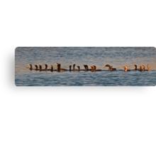 A Gulp of Cormorants Canvas Print
