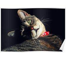 14 Pounds Of Love Poster