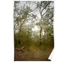 Morning mist, Hawkins Lookout ~ Wiseman's Ferry NSW Poster