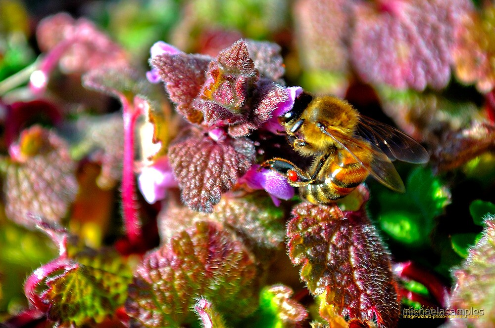 Busy As A Bee! by michaelasamples