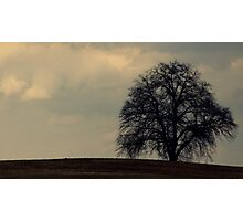 Dark Tree Photographic Print